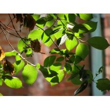 P6163206_Leaves