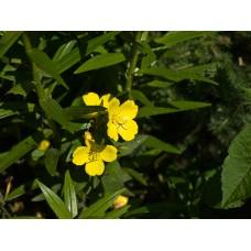 P7058188_Flowers