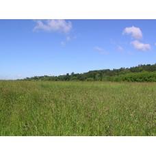 P7083175_Landscape