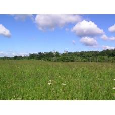 P7083194_Landscape