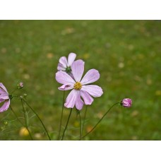 P7088244_Flowers