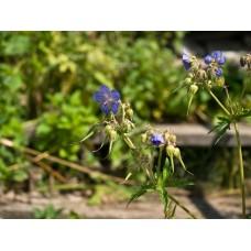 P7088438_Field_flowers