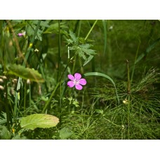 P7158641_Field_flowers