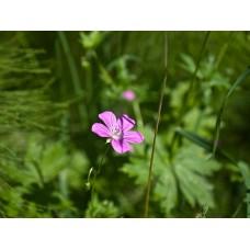 P7158643_Field_flowers