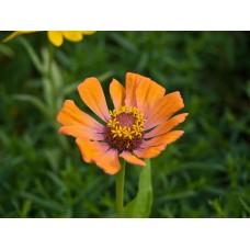 P7158722_Flowers