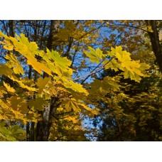 PA040224_Autumn_leaves